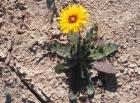 fiori-delle-dune-6