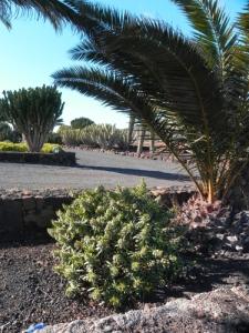 giardino-a-La-Matilla-1