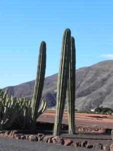 giardino-a-La-Matilla-2