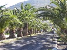 giardino-a-La-Matilla-4