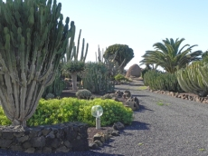 giardino-a-La-Matilla-5