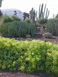 giardino-a-La-Matilla-7