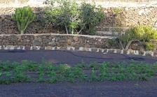 orto-nero-con-patate-a-Lajares