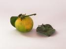 arancia amara Crispifolia