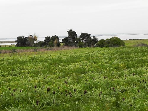 paesaggi-Sardegna-3