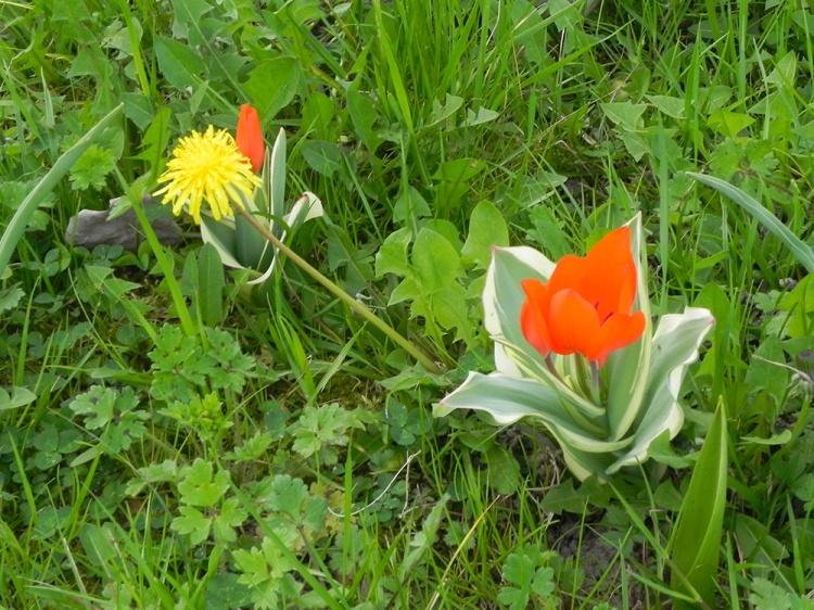 dialogo-tra-piante-spontanee-e-coltivate
