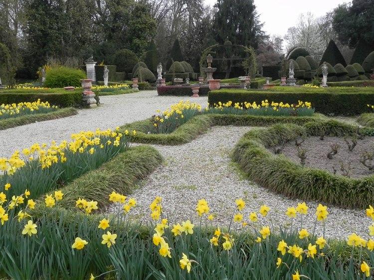 fioritura-di-giunchiglie-a-Villa-Pisani-Bolognesi-Scalabrin